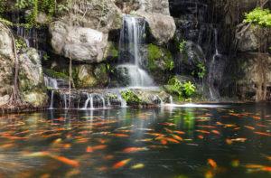 Красивый водоем с рыбой